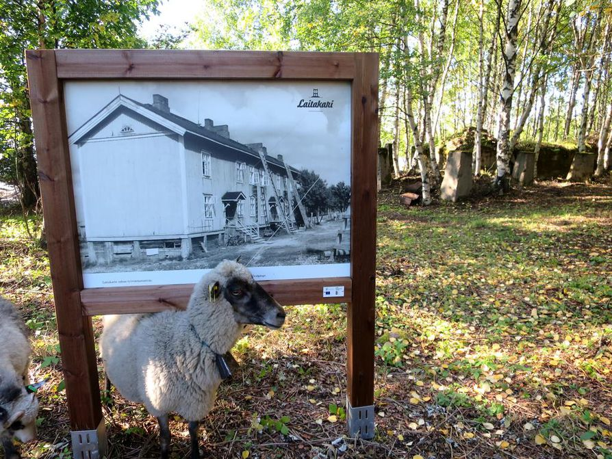 Polun varrella on kuvallisia opasteita, jotka kertovat Laitakarin historiasta. Saarella on kesällä lampaita tekemässä maisemanhoitotöitä.
