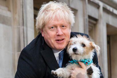 Britanniassa pääministeri Boris Johnson pääsee nyt nopean brexitin kimppuun