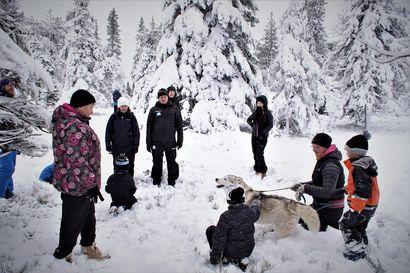 Luminen luontopolku avattiin Pikku-Syötteellä – uusi, kahden kilometrin pituinen reitti kulkee vaihtelevassa maastossa
