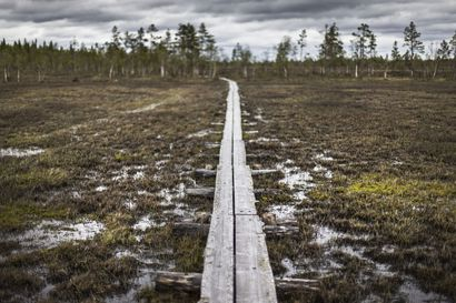 Valtuustoaloite esittää ratkaisua Viiankiaavan pitkospuiden kunnostamiseksi Sodankylässä