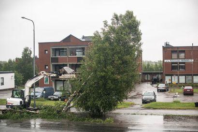 """Puu jos toinenkin kaatuu nyt Kitkantiellä – taustalla pääkadun saneeraus: """"Osa puista on jo huonossa kunnossa"""""""