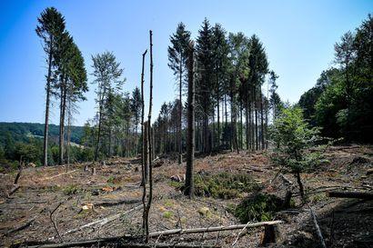 Saksa panee 800 miljoonaa euroa kärsiviin metsiin