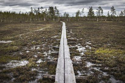 Osa Viiankiaavan luontopolun pitkoksista uusitaan tulevana kesänä – Pian kuljettavissa on neljän kilometrin ympyräreitti