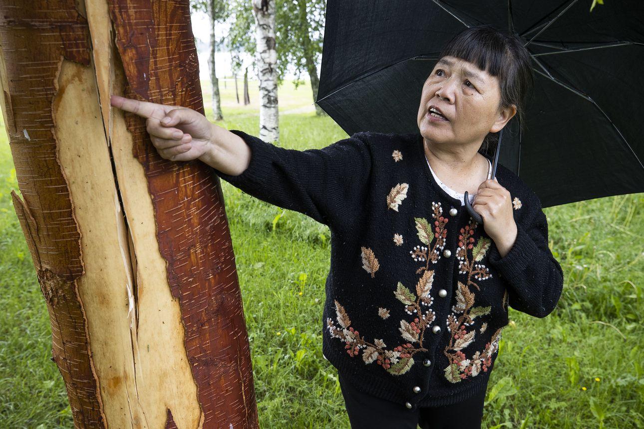 Pallosalama laskeutui taivaasta ja räjäytti Vihannissa talon viereisen koivun