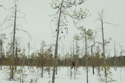 Luontokuvaaja Antti Keränen