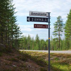 Kemijärven kaupunginhallitus päätti, että Ämmänvaara hakataan osittain