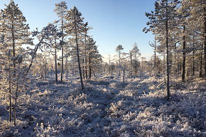 Brändikysely: Luonto erottaa Rovaniemen muista kaupungeista