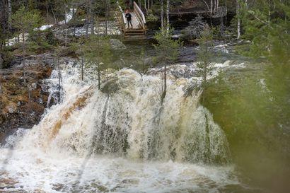 Vesi virtaa vuolaana Kuusamon koskissa - Katso video Kiutakönkään kuohuista