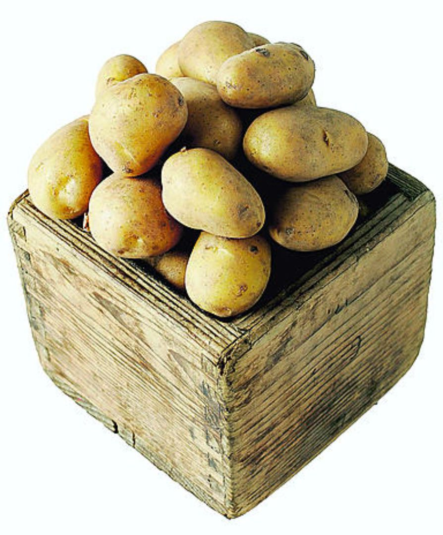 Siikli on yksi suomalaisten perunasuosikeista. Vanhalla tilavuusmitalla kapalla tarkoiteaan tavallisesti viittä litraa. Pikkukappa on kaksi litraa.