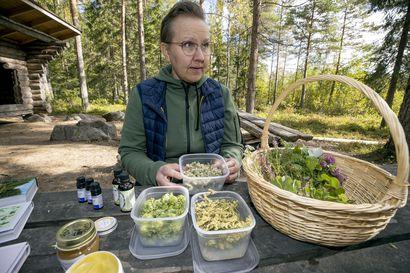 Marjo Törmikoski hurahti kasveihin –Luonnosta löytyy apua moneen vaivaan