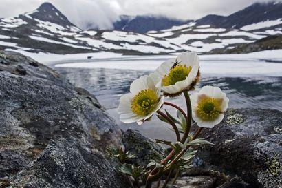 Elokuva-arvio: Pohjoisen luonto ei sanoja kaipaisi –Tunturin tarina loistaa visuaalisuudellaan, mutta ääniraita ei yllä samaan