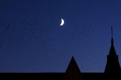 Vuoden pimeimmän hetken jälkeen päivä alkaa taas pidentyä – talvipäivänseisauksena tähtitaivaalla voi nähdä harvinaisen kohtaamisen