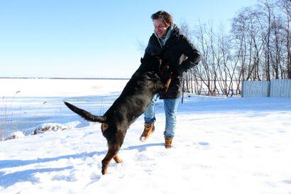 Eläinrakas sairaalan johtaja ylistää Raahea