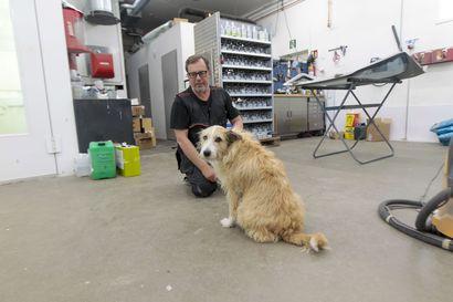 Koira tekee töitä automaalaamossa – Nana hyppää jokaisena arkiaamuna isäntänsä Timo Pyynyn kyytiin ja lähtee tienaamaan