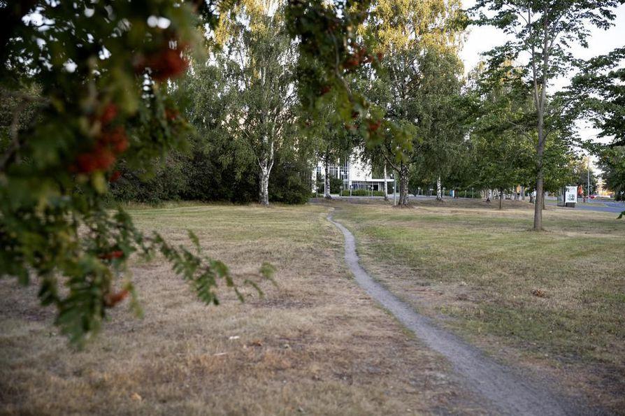 Kuiva heinäkuu näkyy keltaisiksi kärventyneissä nurmikoissa.