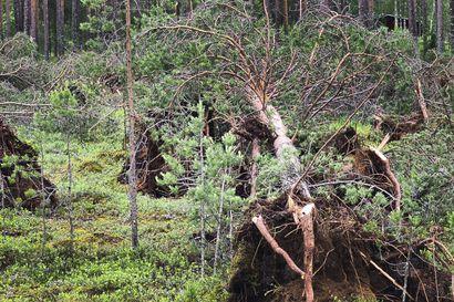 """Puiden korjuuseen päästävä nopeasti –Ministeri Jari Leppä maanantaina tuhoalueelle: """"Tilanne erittäin ikävä ja metsänomistajille kohtuuton"""""""