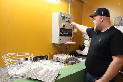 Mustolan Kanalassa Kärsämäellä munitaan reippaan 2 000 kananmunan vuorokausivauhdilla – korona-aika lisännyt munien kysyntää