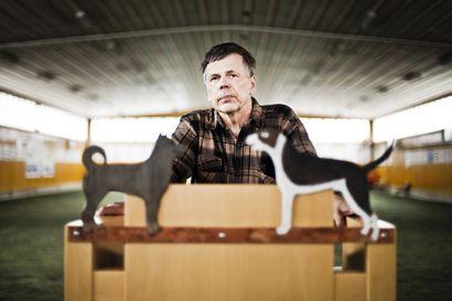 """Pellolainen eläinlääkäri Pekka Salminen, 70, ei jää eläkkeelle: """"Teen tätä niin kauan, kun leikkausveitsi pysyy kädessä"""""""