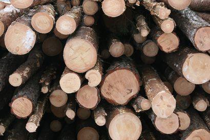 Puukaupassa on merkkejä piristymisestä, havutukkien kysyntä sahoilla kasvanut