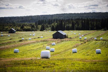Peltovalvonnat aloitetaan Lapissa – ELY-keskus ei suosittele tuenhakijan olevan mukana peltovalvontakäynneillä