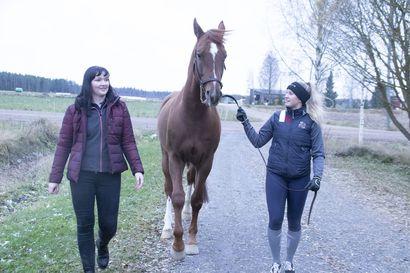 Fidel-ruuna muuttaa Leskelästä Ouluun maajoukkuevalmennukseen –Johanna Hako-Rita iloitsee omasta ja hevosensa puolesta