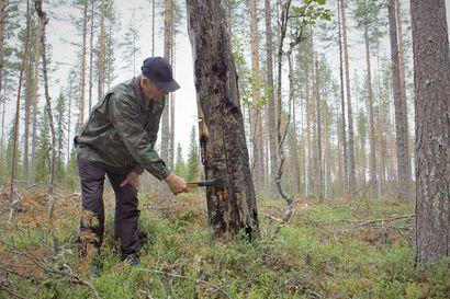 Metsää paloi ennenkin: Syyllisiä ukkosen lisäksi niittymiehet, pellontekijät, salakalastajat, pontikkakokit  – ja Sodankylässä muuan kulkumies Pudasjärveltä.