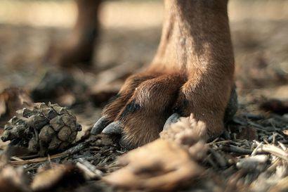 SEY: Eläinsuojeluilmoitusten määrä kasvoi, etenkin koirien kohtelusta ilmoitetaan yhä useammin – eläimiin kohdistuvaa arkista kaltoinkohtelua ei usein tunnisteta väkivallaksi
