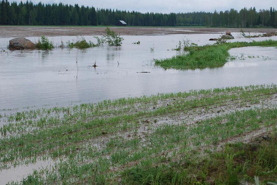Knuutilantien varren viljelysmaat jäivät sadeveden alle oikein kunnolla, kun lauantai-iltana ja sunnuntaiaamuna sade- ja ukkoskuuro oli päällä.