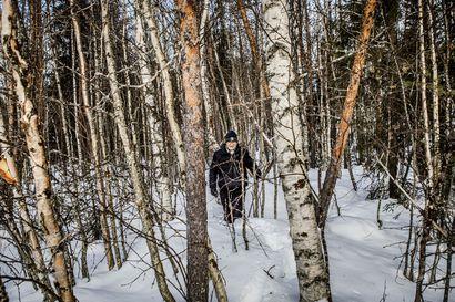 Nuorta tiheikköä, taimikkoja ja hakkuuaukkoja – Näin Kemin tuleva tehdas muuttaa Lapin metsiä