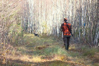 Hirvenmetsästys meni susireviireillä hankalaksi: Koirapyynti käsittämättömän vaikeaa