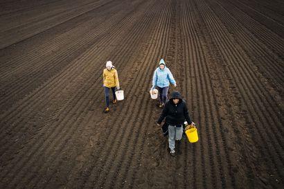 Korona paljasti riippuvuuden ulkomaisesta kausityövoimasta – Kävimme kysymässä ukrainalaisista, miksi he tulevat Suomeen töihin