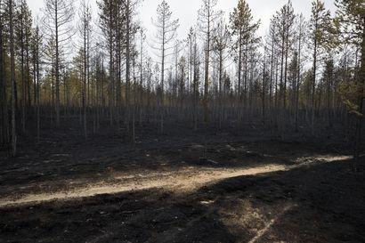 Muhoksen metsäpalon sammutustyöt jatkuvat neljättä päivää – maaperä täytyy saada täysin sammuksiin, ennen kuin alue voidaan luovuttaa maanomistajille