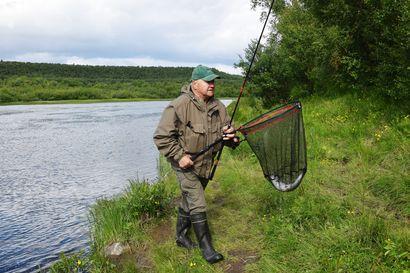 Kyttyrälohta nousee jokeen Norjan puolella – Suomen puolella Näätämöjoessa vieraslajista ei ole vielä havaintoja tänä kesänä