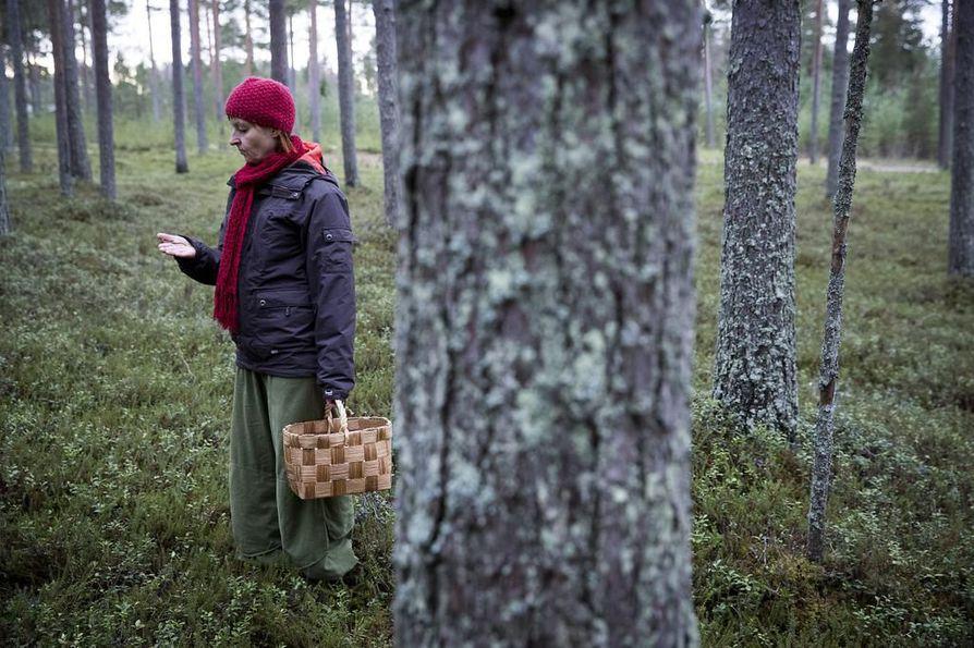Sieniatlaksen ensimmäinen vuosi oli menestys; sieniharrastaja Annikka Kujala
