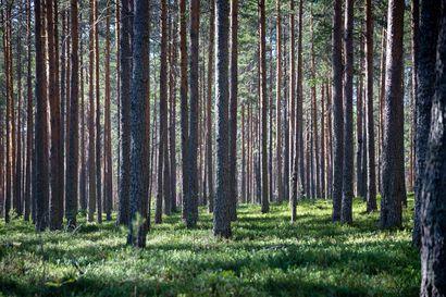 Puukauppaa on tehty Lapissa viime vuotta enemmän