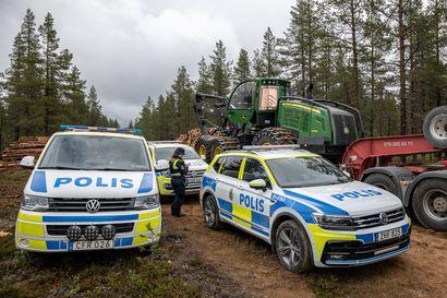 Greenpeace pysäytti hakkuut Muonion saamenkylässä Pajalassa