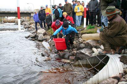 Näitä muutoksia Lapin Ely hakee Iijoen kalatalousvelvoitteisiin – PVO-Vesivoiman mukaan vaatimukset kohtuuttomia