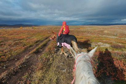 Ritva Lampinen, 71, ratsasti suomenhevosillaan läpi Suomen – huimalle ennätysmatkalle kertyi kilometrejä lähes 1800