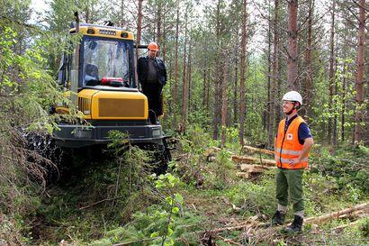 Työtapaturmat ovat vähentyneet selvästi metsäalalla viimeisen kymmenen vuoden aikana Suomessa