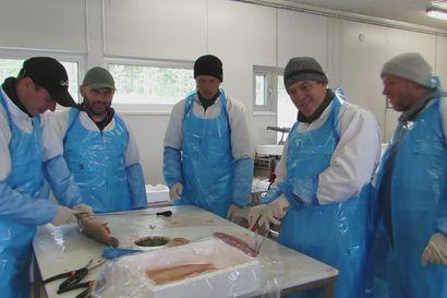Puolan kalastajia oppia onkimassa