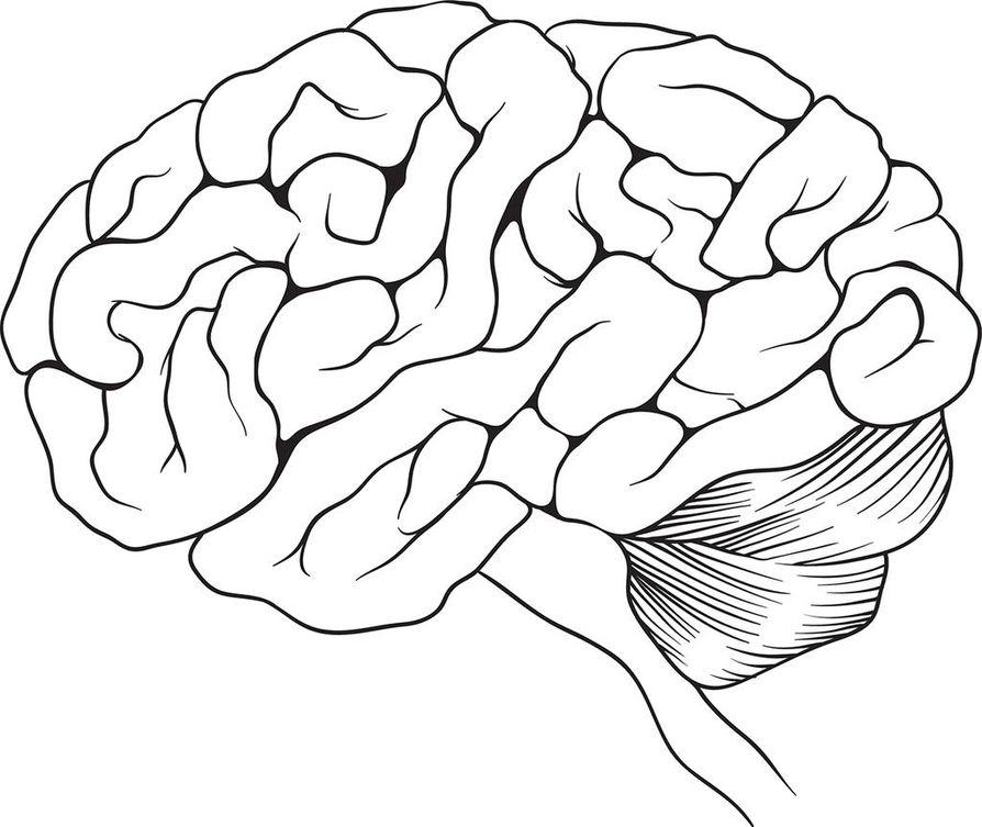 Tutkimuksessa kohtuukäyttö kolminkertaisti riskin hippokampuksen rappeutumiseen. Hippokampus sijaitsee aivojen ohimolohkossa.