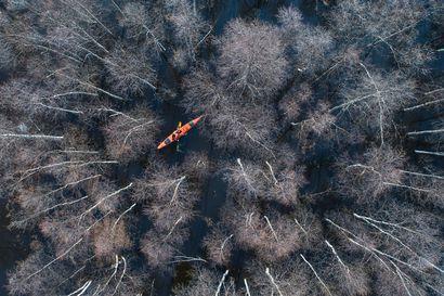 Juha Kauppinen palkittiin Vuoden Luontokuva -kilpailussa – Ivalolainen ammattikuvaaja rentoutuu parhaiten luonnossa kameran kanssa eikä tykkää somettamisesta