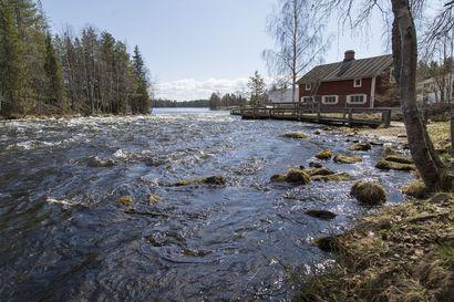 Leenan Koskituvan eteinen hörppäsi vettä, yrittäjä avaa silti juhannukseksi – järvien pinnat hitaassa laskussa, joet Kitkajokea lukuunottamatta palanneet uomiinsa