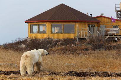 """""""Aina täytyy olla varuillaan"""" – Hyökkäysten välttämiseksi Kanadassa joudutaan monitoroimaan jääkarhujen liikkeitä tutkan avulla"""