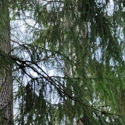 Oravat leikkimässä