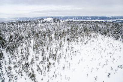 Rovaniemi käyttää etuosto-oikeutta Ounasvaaran metsätilaan – Kaupunginhallitus kokousti maanantaina ja päätti maahankinnoista ja tonttiasioista