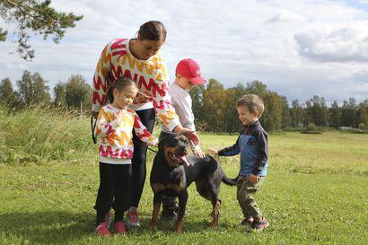 """Lapin koirahoitoloilla on ollut hiljainen vuosi –""""Kun tuli ensimmäinen korona-aalto, koko putiikki hiljeni"""""""