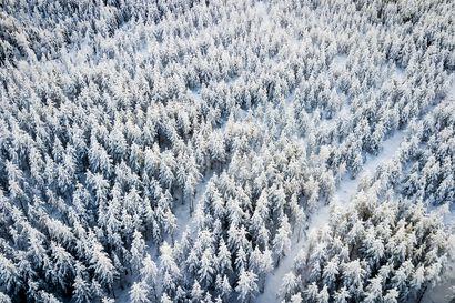 Metsänhoitoyhdistykset yhdistyvät Lapissa