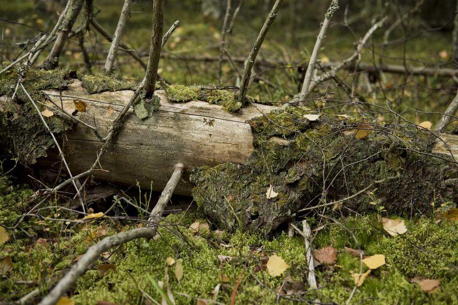 Suomessa on metsien suojelun määrässä Euroopan keskikastia, mutta laadussa kärkipäässä.