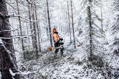 Metsänhoidoyhdistys huolissaan metsäalan yrittäjien pärjäämisestä – pyrkii nyt työllistämistoimiin